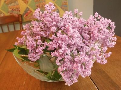 Lilac web