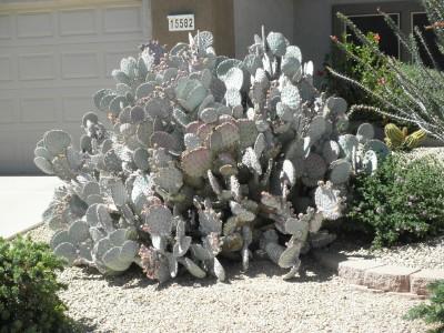 Grandpa cactus web
